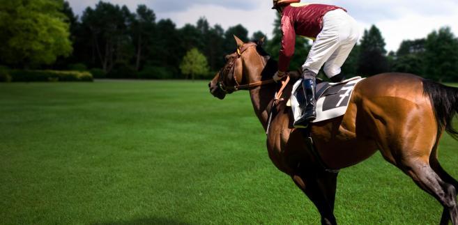 Na aukcji zostanie wystawione 60 koni z hodowli państwowej oraz 5 właścicieli prywatnych.