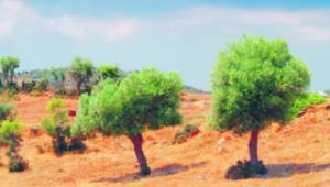 UE dofinansowała fikcyjne greckie plantacje... shutterstock