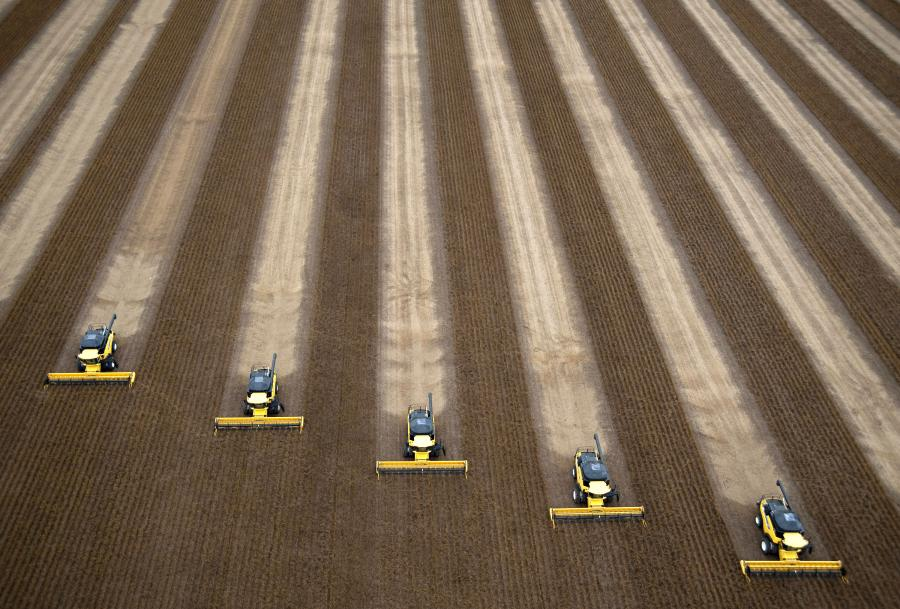 Brazylia i Argentyna po Stanach Zjednoczonych są największymi eksporterami soi na świecie. Na zdj. Kombajny zbierające soję na farmie w Correntina, w Brazylii. 1. kwietnia 2010.