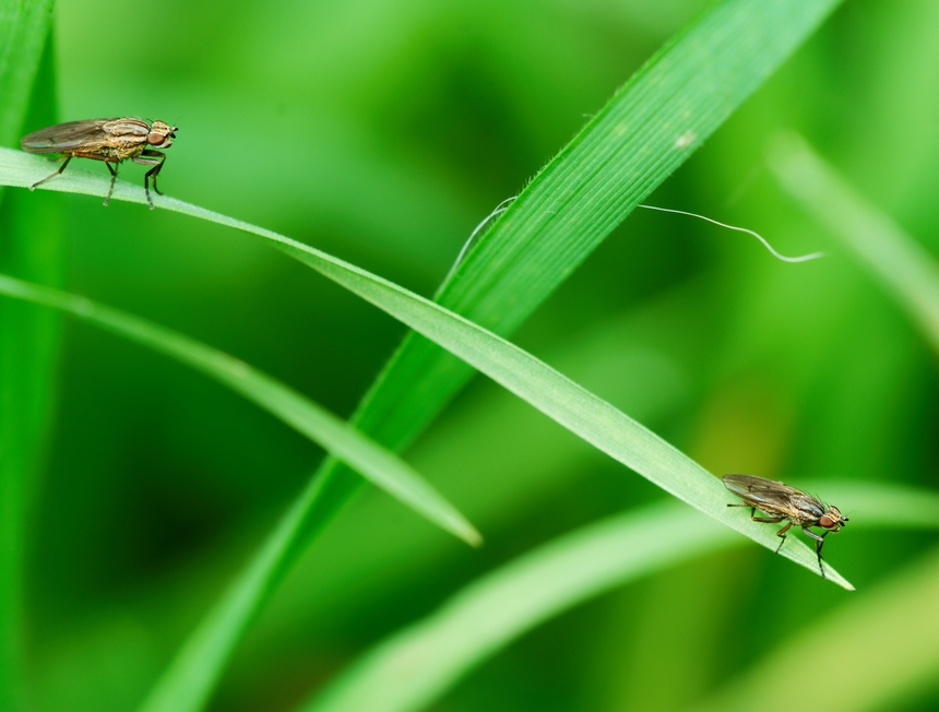 Muchy, owady