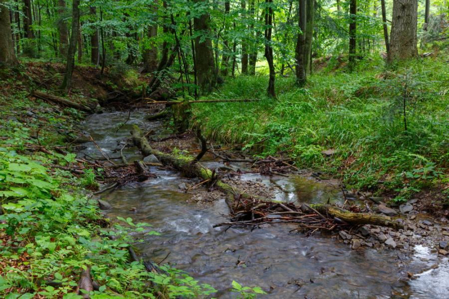 Biezczady, przyroda, las, wakacje