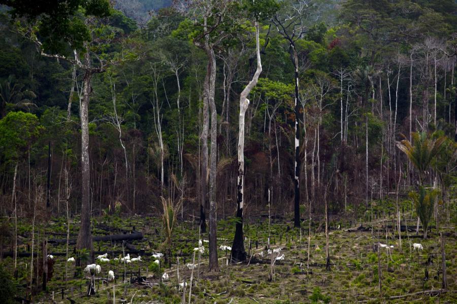 wypalony las w Amazonii Brazylia Bloomberg