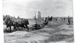 Żniwa w majątku hrabiego Remigiusza Grocholskiego, 1924 r. fot. NAC
